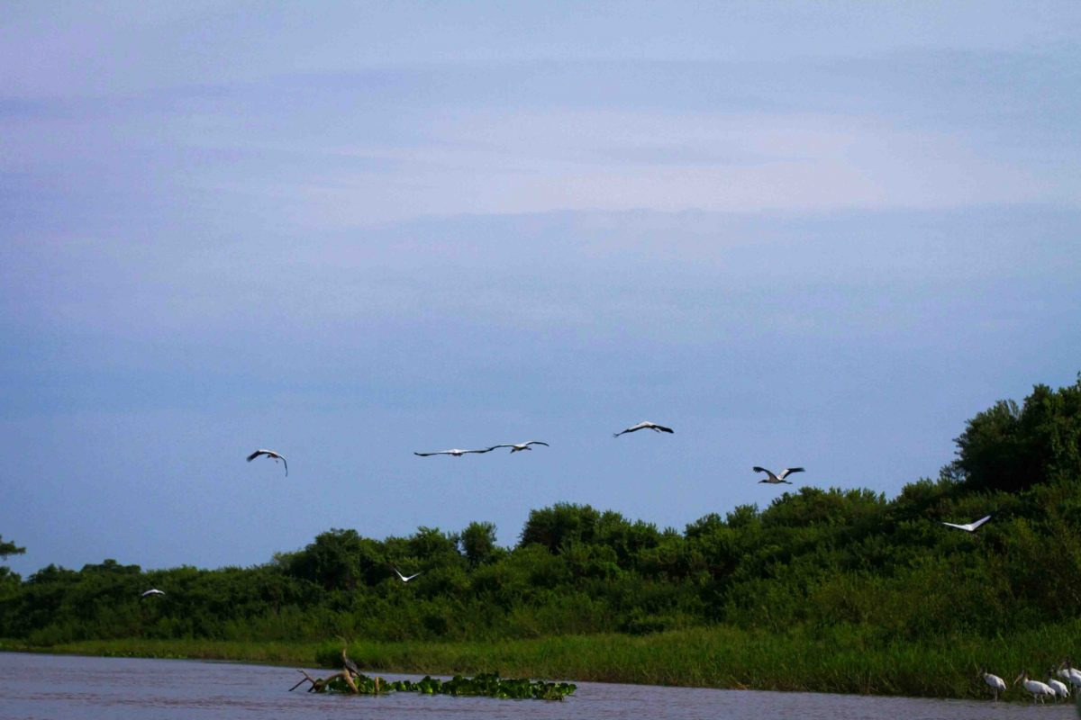 Pantanal3-15